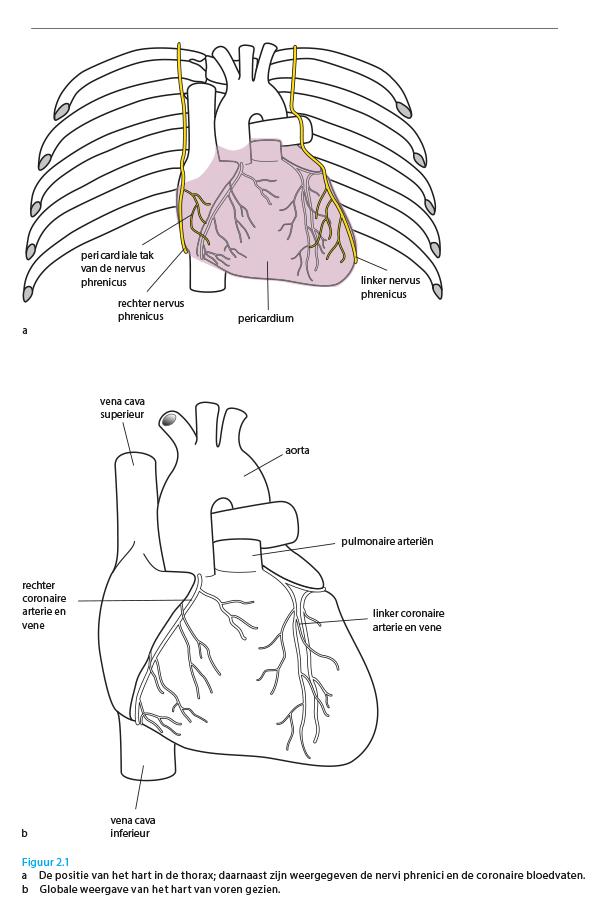 Extreem Anatomie van hart en circulatie - de betekenis volgens ABC van de @VR69