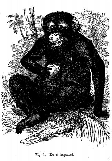 De chimpansé