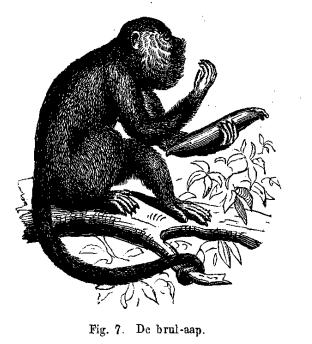 De brul-aap
