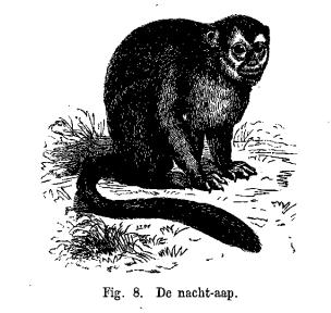 De nacht-aap